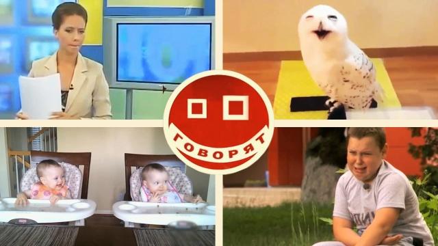 Аффтар жжот: самые смешные видео года